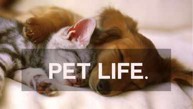 PETS.