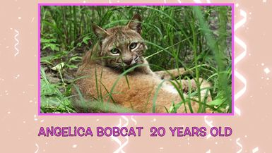 September 2014 Big Cat and Bearcat Birthdays