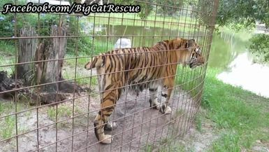 Keisha must have been hanging out in her pool! Now she's walking around to drip-dry!