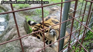"Jasmine Tiger says, ""I always LOVE a good shower, but NOT the head, please!"""