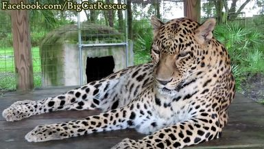 Sundari close-up! Just look at all those spots!