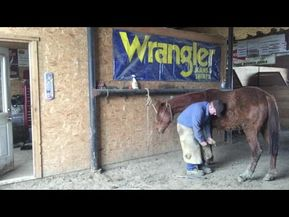 THE CONSCIOUS FARRIER-2