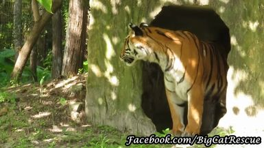 BONUS! Priya surveying her surroundings from her new den!