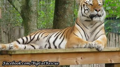 Beautiful Dutchess enjoying the breeze from atop her platform!