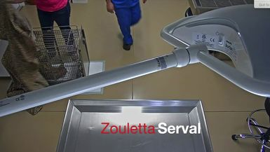 Zouletta Serval Surgery