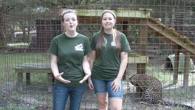 Big Cat Rescue Supports #ifakeit