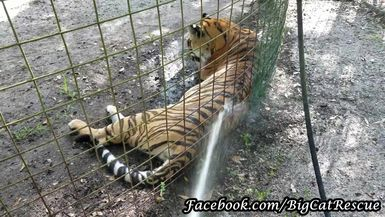 It's HOT, and Priya is beating the heat with a cool shower from Keeper Marie.