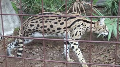 The Unsolved Mystery of Desiree Serval
