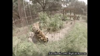 Here's a new look! Keeper Marie is wearing a GoPro video to give you a different view of Miss Keish