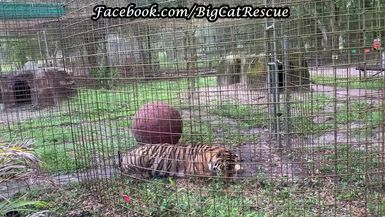 Jasmine is LOVING the shower she's getting from Keeper Bethany and provides plenty of appreciative