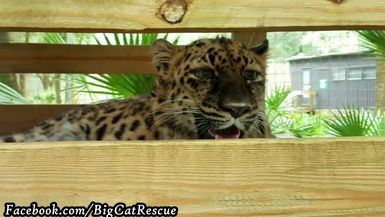 Natalia is more interested in what's happening than cooling off in her den with A/C.