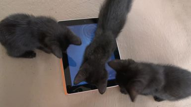 Black Kitten VS iPad