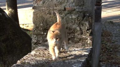 National Feral Cat Day - 2014 October 16