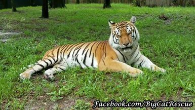 Beautiful Dutchess relaxing with Keeper Marie
