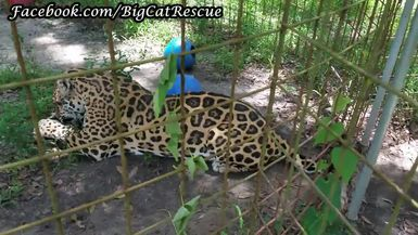"""Keepers talking to Manny and discussing the """"face"""" in his spots!"""