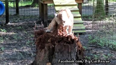 Smalls - now THAT'S what I call a scratching post... or the remains of one!
