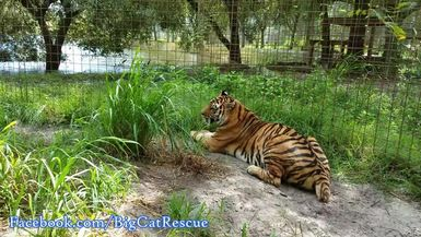 Sweet Keisha is enjoying the breeze on a beautiful day!
