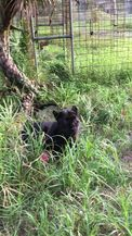 Jinx Black Leopard playing and doing a little gardening this morning. What a silly and happy boy!