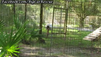 Checking out Illithia's large enclosure and her neighbor, Diablo. (Part 1)