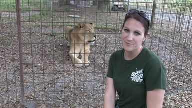 What Happens When You Neuter A Male Lion?