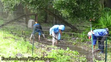 SUPPORTERS ONLY - BONUS! Digging trenches in the rain to drain the water away from the cats! Just