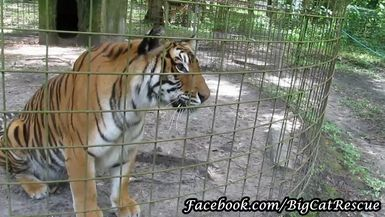 Priya gets a sicle from Keeper Marie on a very hot day.